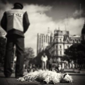 Buenos Aires - El perro que duerme
